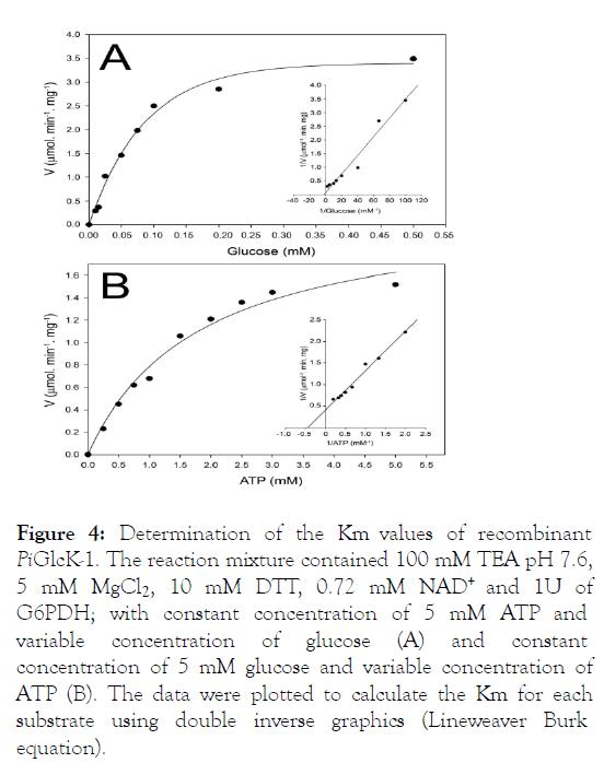 fungal-genomics-recombinant