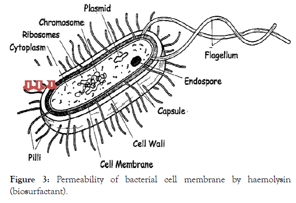 petroleum-environmental-biotechnology-bacterial-cell