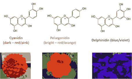 ukrainian-ecology-chemical
