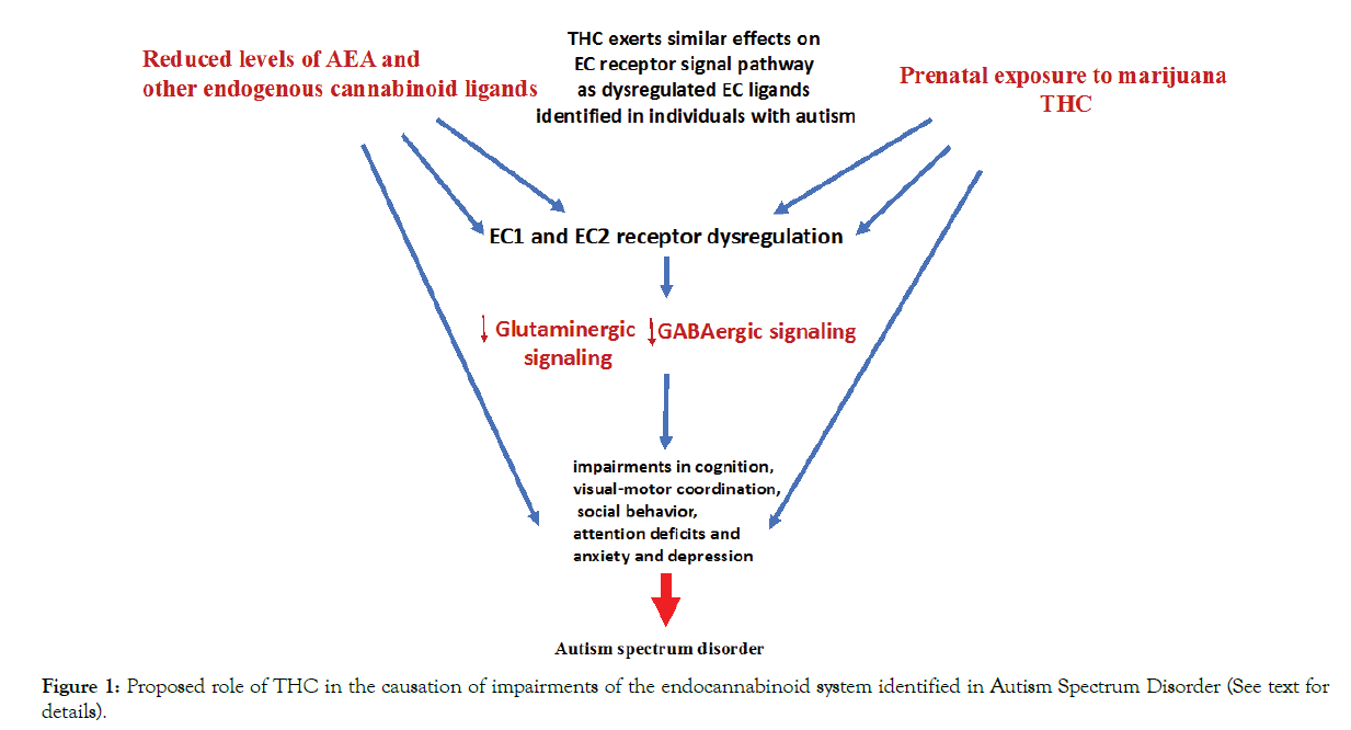 Autism-Proposed-role