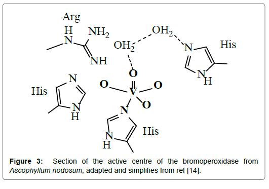 A Role for Vanadium in Ascidians and in Marine Algae