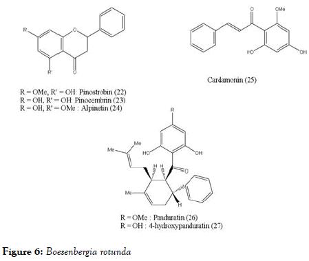 antivirals-antiretrovirals-Boesenbergia