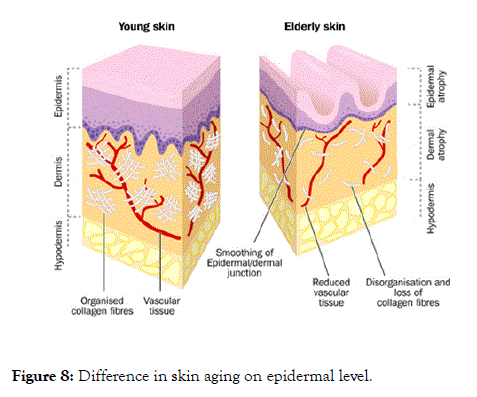 clinical-experimental-dermatology-research-aging