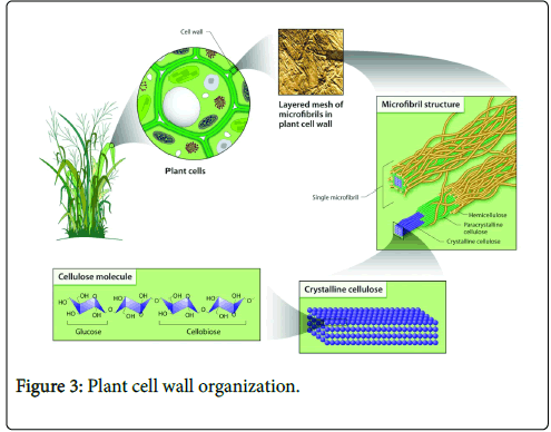 forest-research-Plant-cell