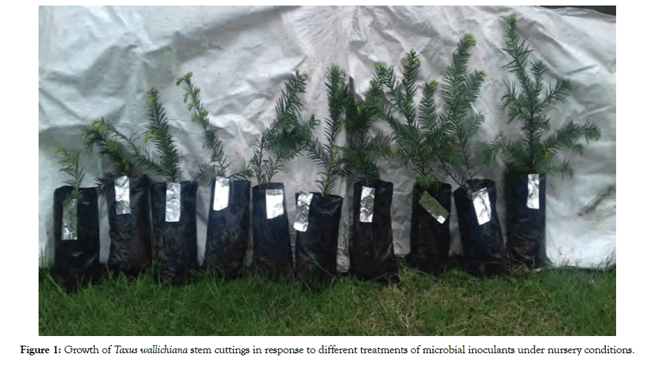 forest-research-open-access-cuttings