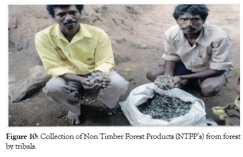 forest-research-open-access-tribals