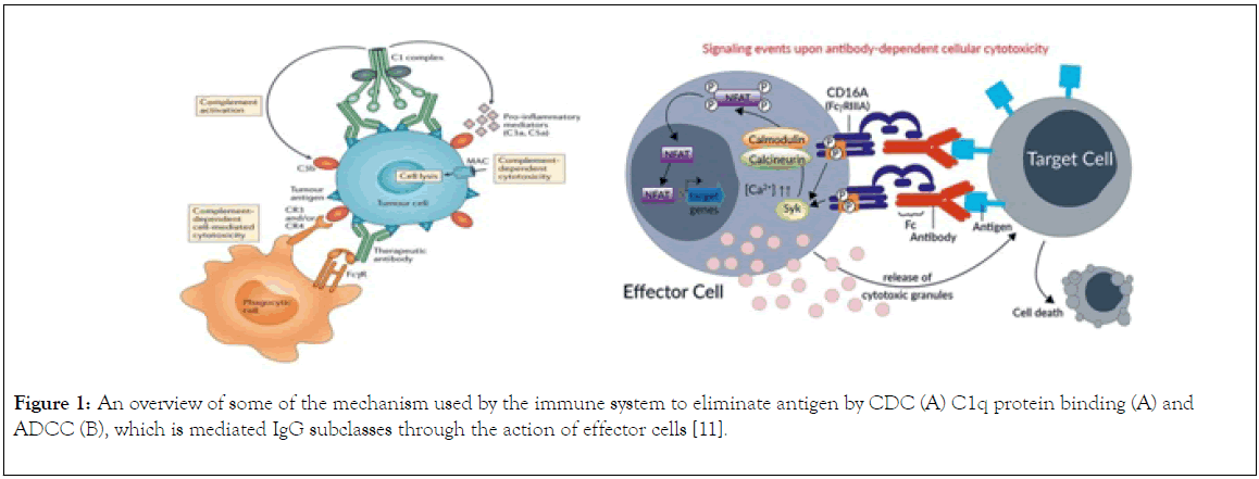 immunome-research-mechanism