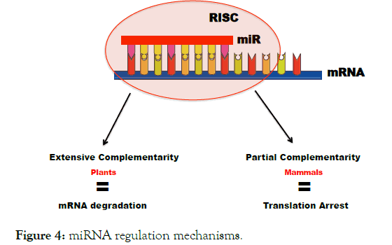 immunome-research-mechanisms