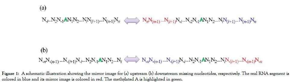 immunome-research-schematic