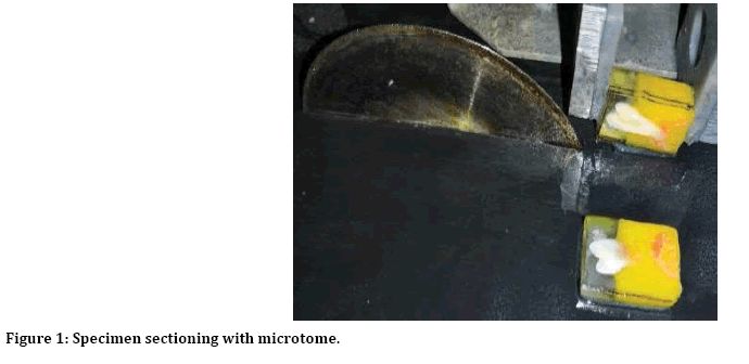 jrmds-microtome