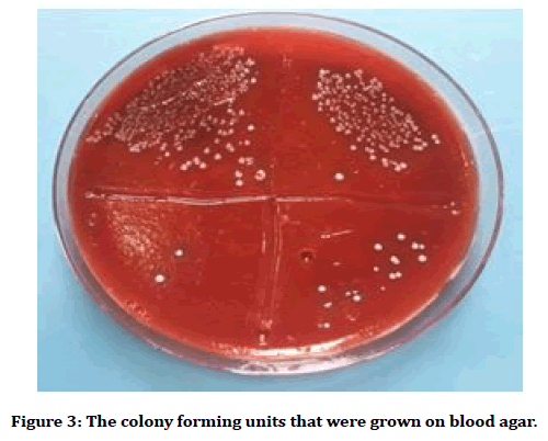 medical-dental-science-blood-agar