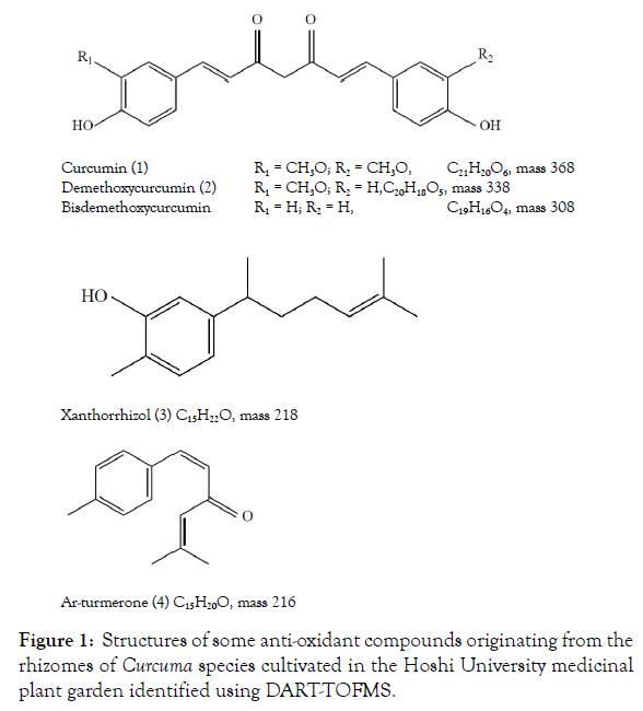 medicinal-aromatic-plants-curcuma-species-8-336-g001