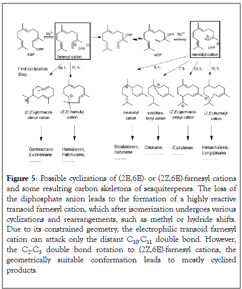 natural-products-chemistry-research-cyclizations