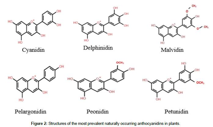 plant-biochemistry-physiology-anthocyanidins