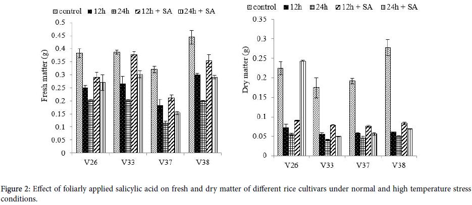 plant-biochemistry-physiology-rice-cultivars