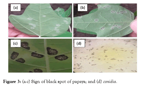plant-pathology-microbiology-papaya