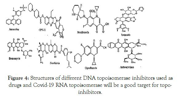 virology-mycology-topoisomerase